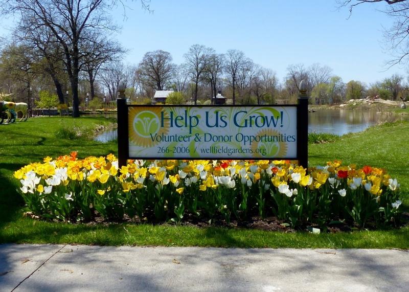 help us grow sign white yellow tulips