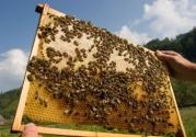 Beekeeping image