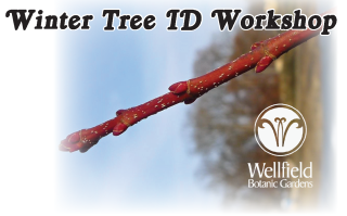 Winter Tree ID facebook 2016