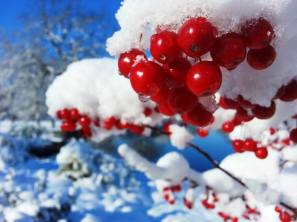 Snow on Crabapple (EG) 2015