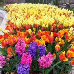garden-flower-beauty-shots-eg-6