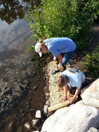 shoreline-planting-project-rotary-district-grant-2016-15