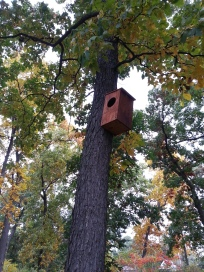 Barred Owl Box
