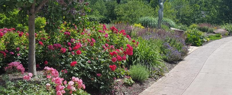 June\'s still eventful! « Wellfield Botanic Gardens