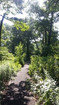 Woodland Conservation Garden 7-18-2017 (17)