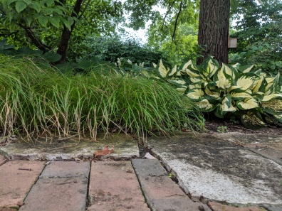 Carex can be found in our English Cottage Garden, which is quite shaded.